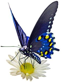 ANIMALS: butterflies and various insects