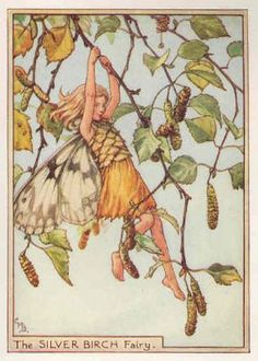 FLOWER FAIRIES: c1940. SILVER BIRCH. Cicely Mary BARKER. Old Print.