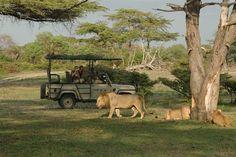Safari gids