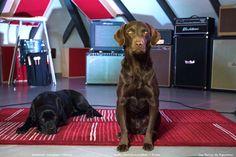 Hummock and Bobby, studio hounds at Supertone Records vintage residential recording studio, Estivella. Valencia. Spain