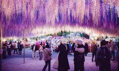 河內藤園 − 夢幻的魔法童話世界 – FAST JAPAN – 日本旅遊信息