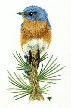 Eastern Blue Bird on Pine Branch: Needle Painting Hand Embroidery