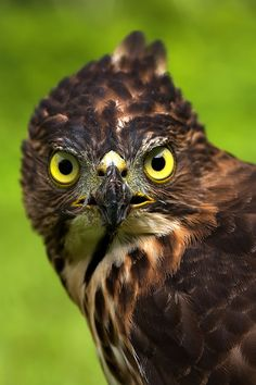 'My Eyes' by Lim Hamdani on 500px #wildlife #animal #bird