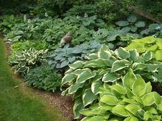 Hosta garden -Need to do this in the back yard.. maybe this will be the year!