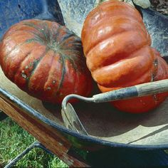Heirloom Pumpkin Varieties and Other Squash - All about the history and different types of squash!