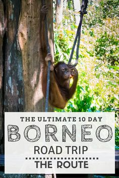 The Ultimate 10 Day Road Trip Around Malaysian Borneo