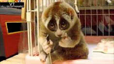 Image result for cutest creature