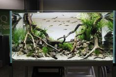 Driftwood Roots For Fish Tank Background. Purchase natural driftwood for your aquarium here: