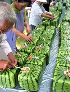 CUBIC WATERMELONS     In Japan, farmers of the Zentsuji region found a way to grow cubic watermelons, by growing the fruits in glass boxes and letting them naturally assume the shape of the receptacle. The square shape is designed to make the melons easier to stack and store.