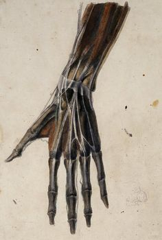 In the hand and wrist it's possible to see the veins and ligaments almost as if it were naked.  If you have thin, pale skin, if not you have to make do with drawings such as this.