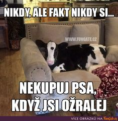 Ale, Funny Moments, Jokes, In This Moment, Animals, Animales, Husky Jokes, Animaux, Ale Beer