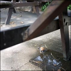 Chaffinch by the picnic table.  Wimbledon Common, London.  © Paul Salmon.