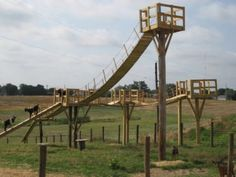 How crazy is this playground for little Nigerian Dwarf Goats?! Whoever built this is incredibly creative and lovingly dedicated to their herd. I personally would be terrified of my little goats falling off this roller coaster!!