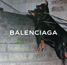 Bad Girl Aesthetic, Aesthetic Themes, Retro Aesthetic, Aesthetic Photo, Aesthetic Pictures, Aesthetic Dark, Black Doberman, Doberman Dogs, Photo Wall Collage
