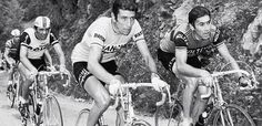 Il Lombardia is starting in Bergamo this year to honour Italian cycling star Felice Gimondi, here photographed with Eddy Merckx. Photo comes from the organiser's website.    Felice is 70!