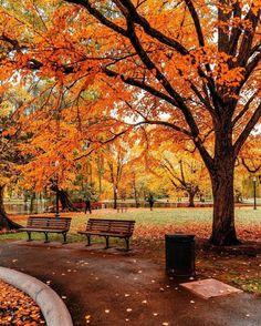 Fall Pictures, Nature Pictures, Pretty Pictures, Autumn Cozy, Autumn Witch, Autumn Scenes, Autumn Nature, Autumn Aesthetic, Autumn Photography