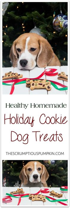Christmas Cookie Dog Treats | An easy, all-natural, DIY dog treat with festive red and green! Perfect for a homemade holiday gift. | The Scrumptious Pumpkin