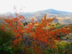 Colores del otoño en el Valle del Alberche.