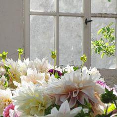 Vielleicht lässt das Bild erahnen wie stark mein floraler Herzschlag bei diesem Anblick war als wir die Location für den Blumen-Workshop mit @stilzitat betraten??? . This view made me speechless for a moment... A perfect location for this inspiring workshop with Anastasia @stilzitat... .  . #flower #flowers #flowermagic #flowerpower #flowerslovers #flowerstagram #instaflowers #flowersofinstagram #flowersmakemehappy #flowerstyling #flowerblogger @wasblumenmachen #dahlien #dahlia #dahlienliebe…