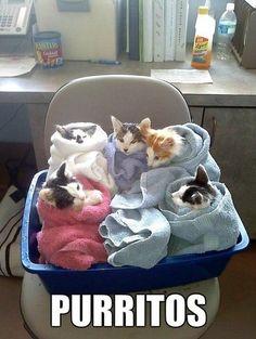 Fave Life Hacks & Animal Memes - Paperbag Kat