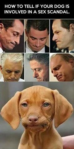 how to tell if your dog is involved in a sex scandal.