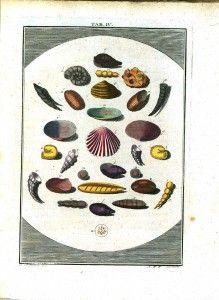Vintage French Science; Vintage Microbiology