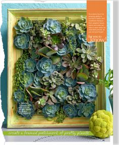 Succulent in a frame DIY
