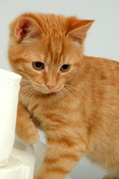 orange kitties are the best!