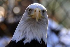 Image result for bird front view