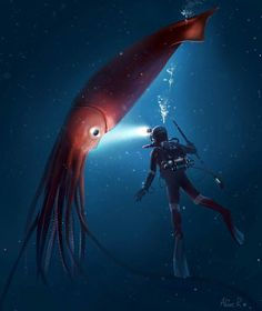 Squid with diver