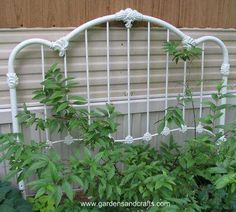 Metal bed frame for your climbing vines.
