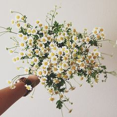 Chamomile or Feverfew flowers.  Some people are allergic, so tread carefully if you plan on using in your bridal bouquet.