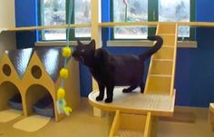 Northeast Animal Shelter Unveils New Cat Play Rooms [VIDEO] - Salem, MA Patch