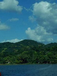 Took this pretty shot while strolling along the Chagres River in Colon Panama. [496 x 662]