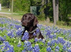 Enjoying a beautiful day in the flowers :) #dog #flowers #happy