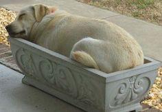 'Doggy Planter'! So Cute!