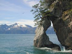 Coastal Erosion. Kenai Fjords National Park, Alaska, USA