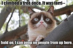 grumpy cat funny quotes - Google Search