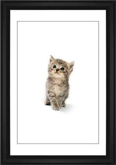 Kitten Framed Print, Black, Classic, Black, White, Single piece, 20 x 30 inches