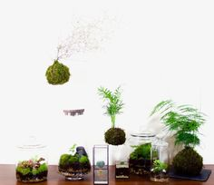 Terrarium Plants, Green
