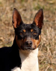 Rene - what a handsome dog!