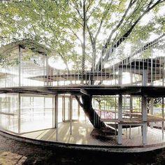 Fuji kindergarten ringing around the Tree #Architecture #tezukaarchitects #kidsspaces