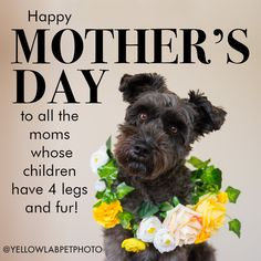 Make a designer wreath for your furbaby — Yellow Lab Pet Photographer Dog Mothers Day, Happy Mothers Day Wishes, Happy Mother Day Quotes, Dog Quotes, Animal Quotes, Qoutes, Funny Quotes, Cute Cat Costumes, Pet Photographer