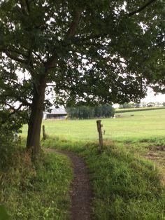 Countryside, Plants, Nature, Trekking, Drive Way, Fotografia, Plant, Planets