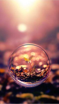 Flower on bubble wallpaper. Nature, soil, bubble, flowers, brown, environment, iPhone, Android, HD Wallpaper Sazum 2017.