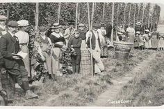 Hop picking Kent