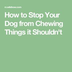 How to Stop Your Dog from Chewing Things it Shouldn't
