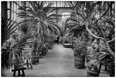 palms in a warehouse