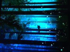 Fire Flies in the Woods This is what I want you to see. They are so cool. I love you!