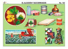 73 El trigo y sus derivados  Educativo  Pinterest  Monografias
